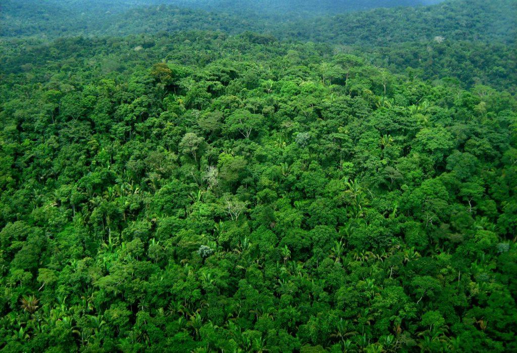 imagem de floresta ilustrando engenharia florestal