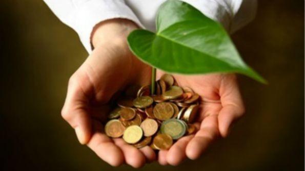 mãos segurando muda de planta sobre moedas, representando engenharia verde