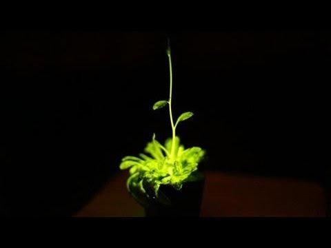 plantas brilhantes