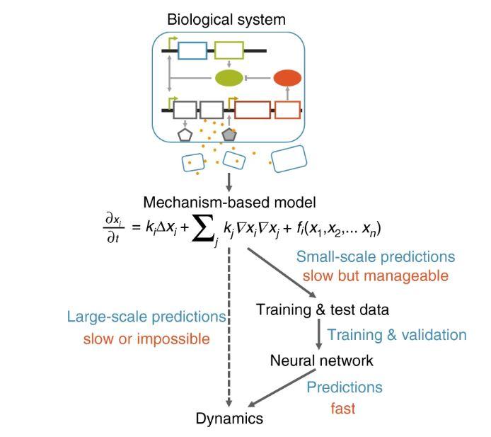 circuitos biológicos machine learning