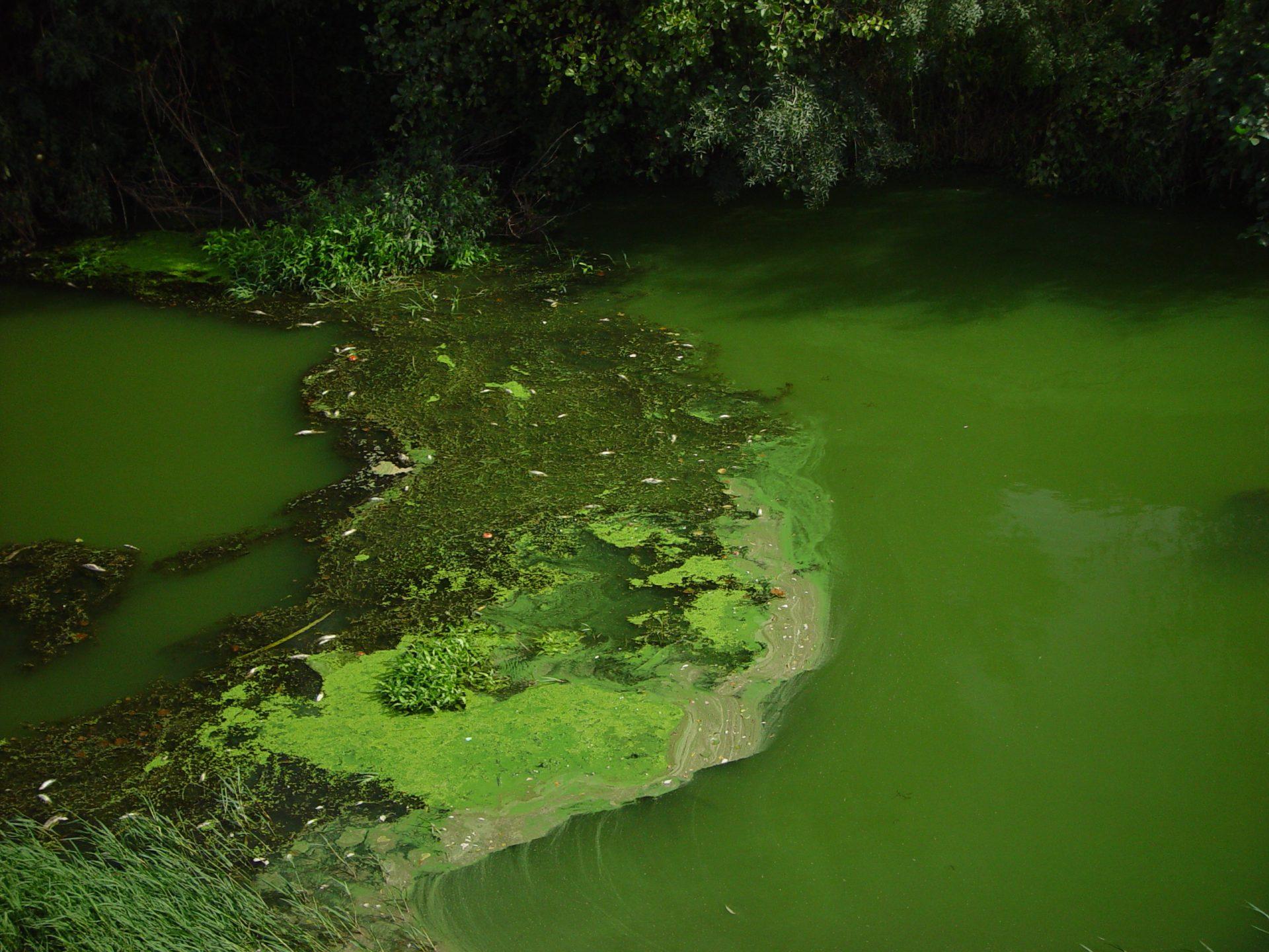 Universidade desenvolve equipamento portátil para detecção de algas em amostras de água