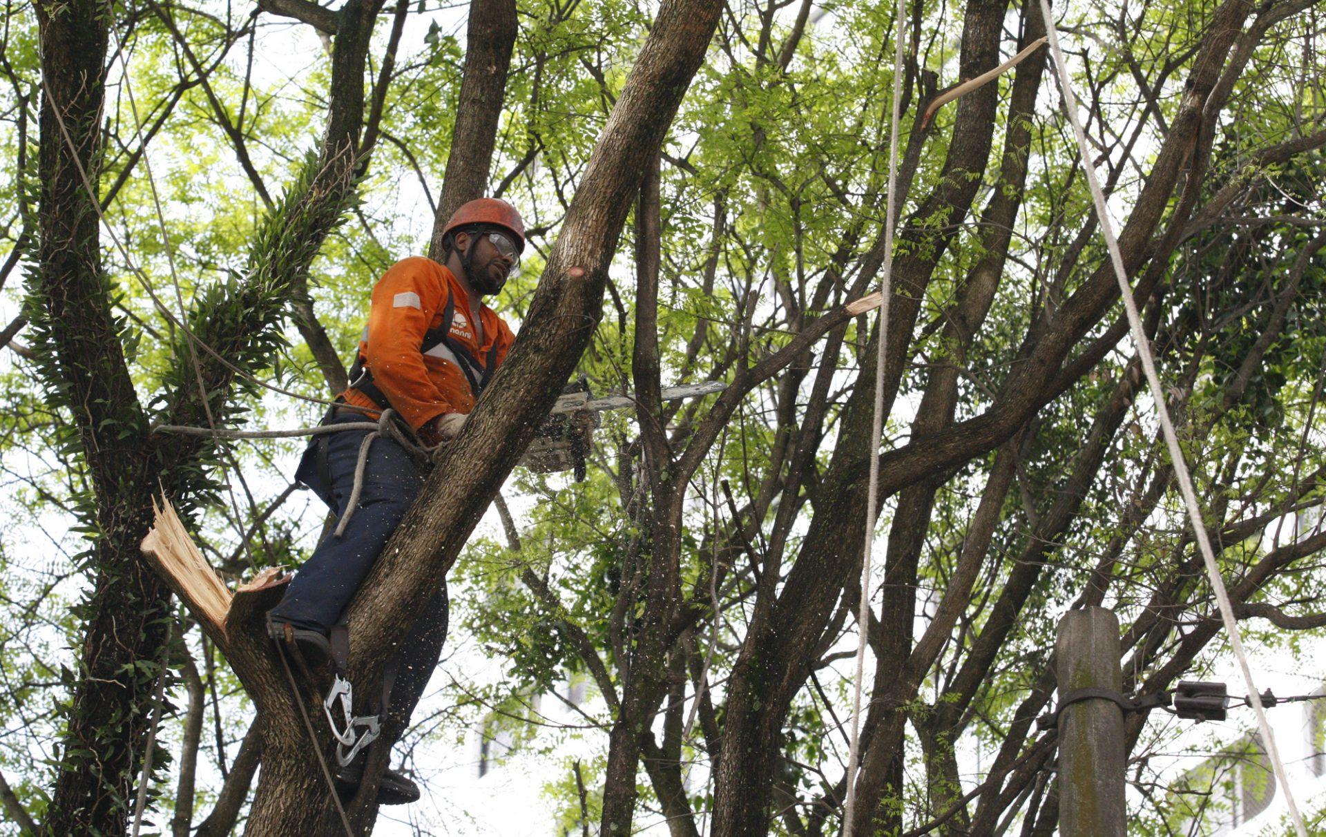 Lei de poda de árvores é alterada em SP: entenda o que muda