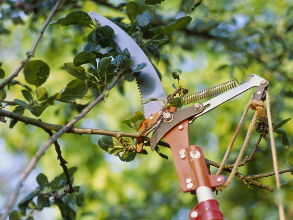 imagem de foice podando árvores