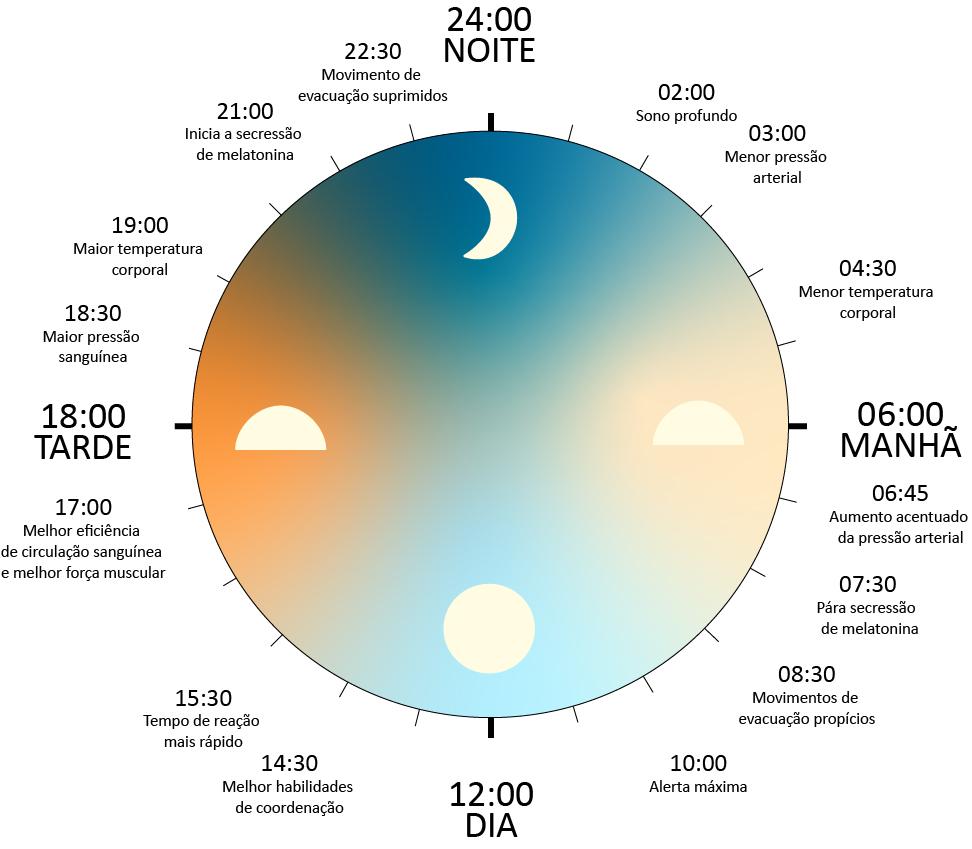 imagem de ritmo circadiano com os horários de cada item relacionado que ocorre no organismo