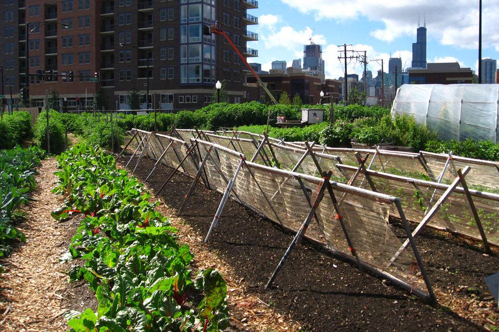 agricultura urbana pode melhorar a segurança alimentar nas cidades