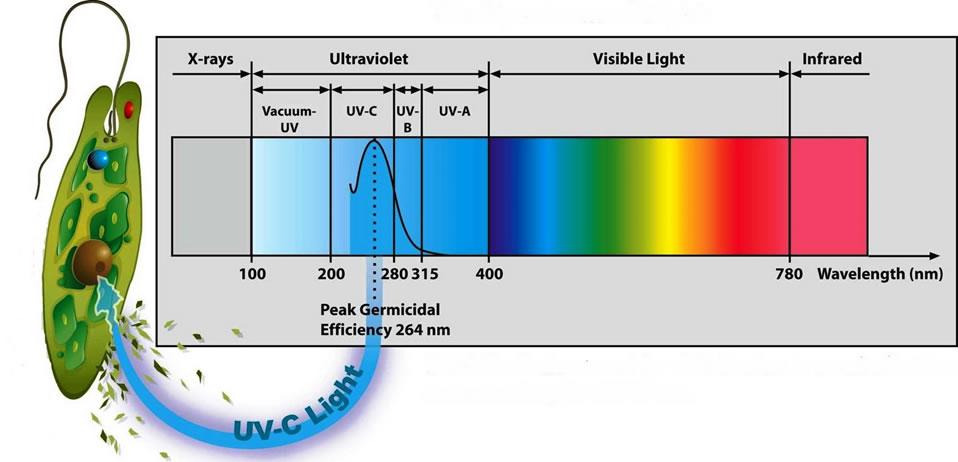 Faixa germicida da radiação UV no espectro eletromagnético. Imagem: auxtrat.com.br