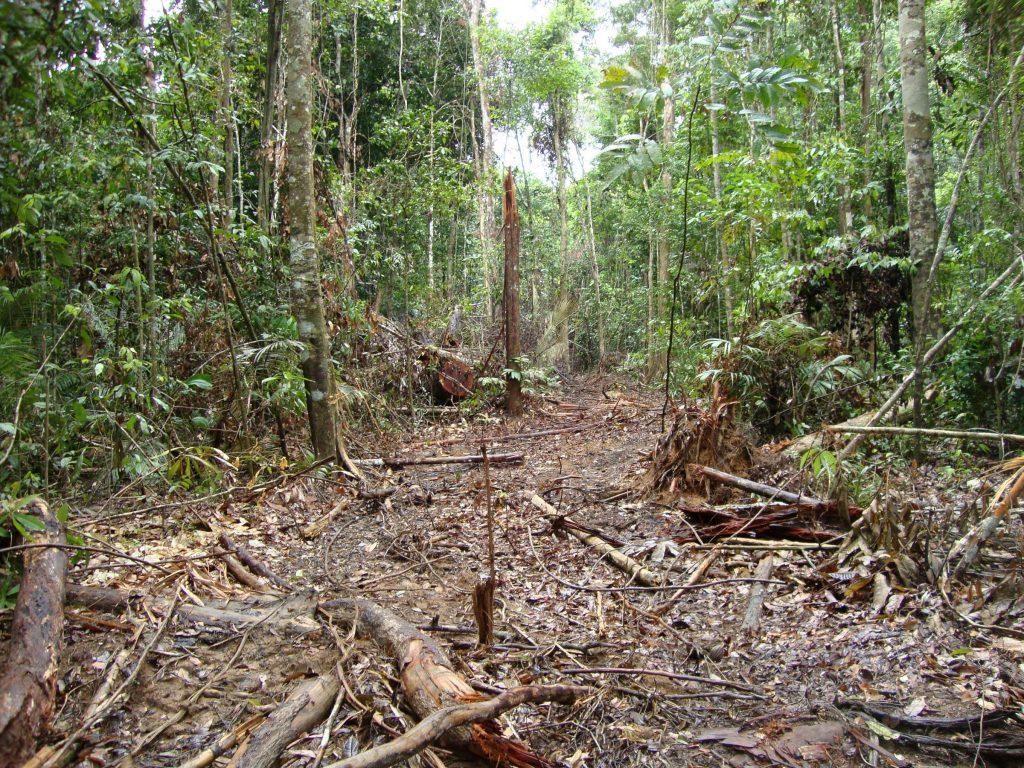 desmatamento amazônia e pandemia