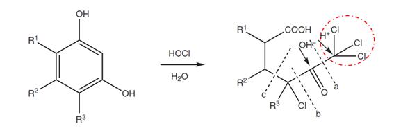 Mecanismo simplificado da formação de trihalometanos (THMs) (circulado com tracejado vermelho) a partir da molécula de resorcinol e ácido hipocloroso. Adaptado de Aguirre-Gonzalez et al. (2011)