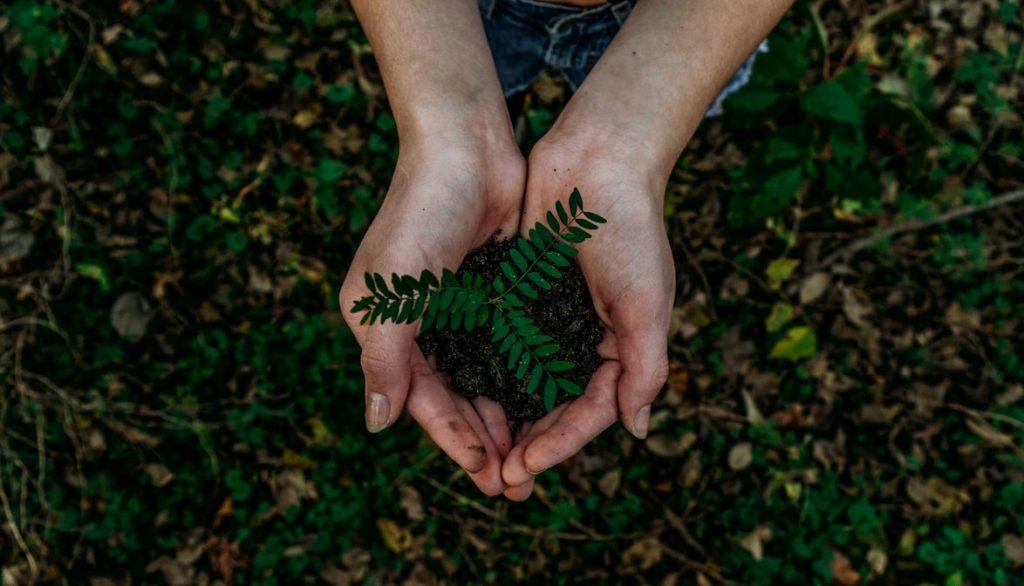 mãos segurando uma planta, representando sustentabilidade nas tendências da indústria da construção civil. Imagem ilustrativa