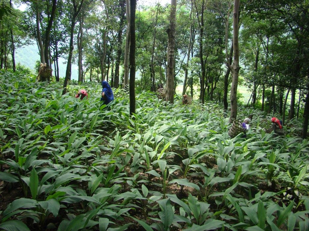 O que são as agroflorestas e quais benefícios socioambientais elas promovem?