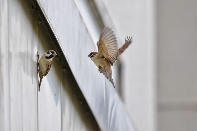 Pássaros pousados em edifício