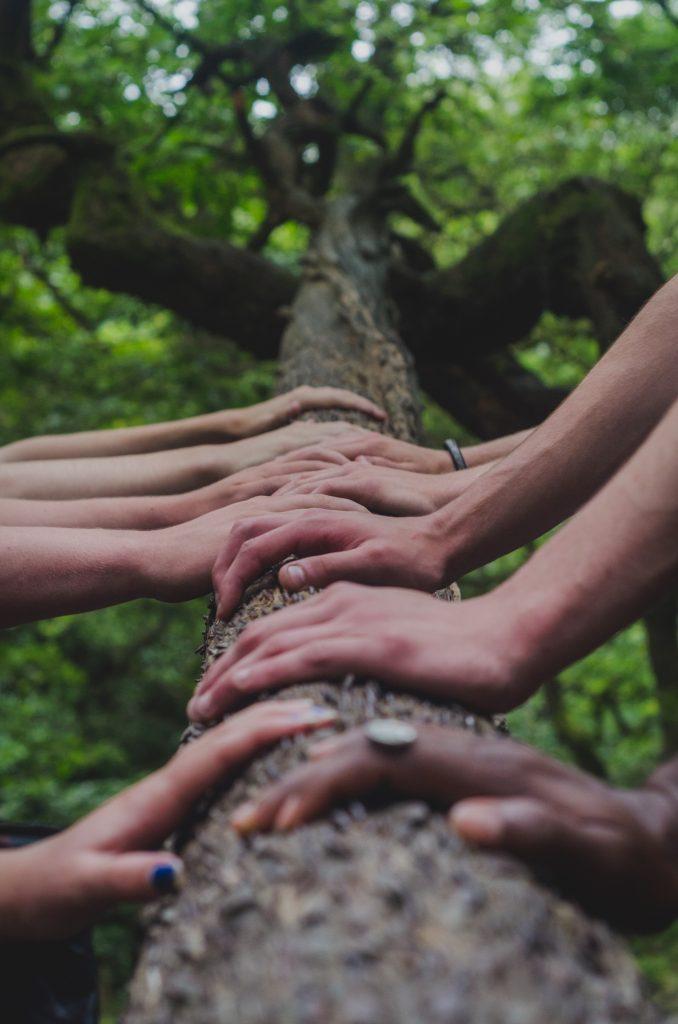 mãos de várias pessoas sobre tronco de árvore, representando trabalho em equipe em soft skills