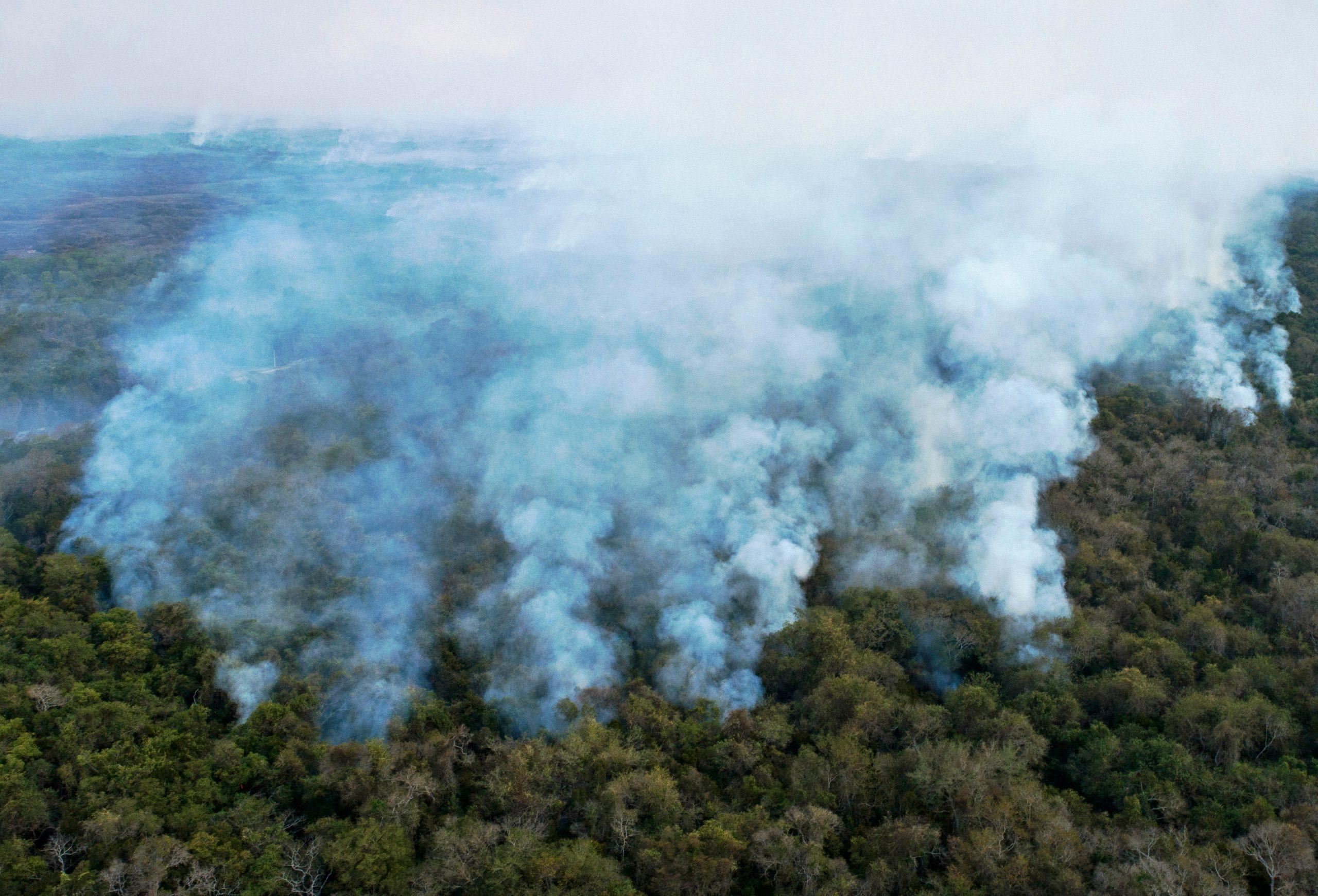 queimadas destruindo pantanal