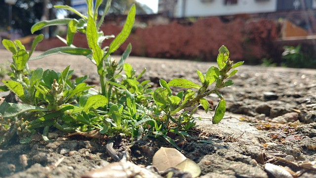 planta nascendo em calçada