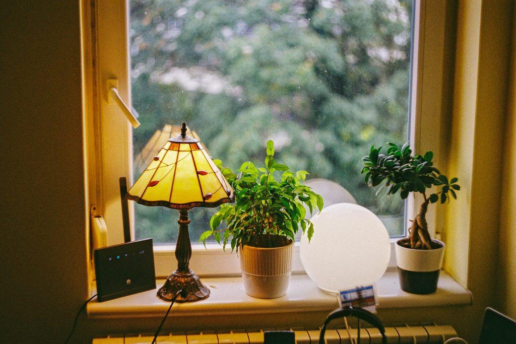 plantas no escritório representando biofilia