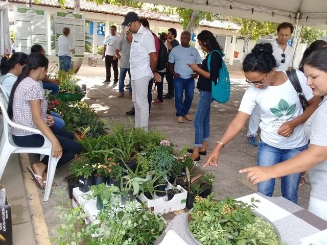 pessoas observando as hortaliças cultivadas nas hortas em feira