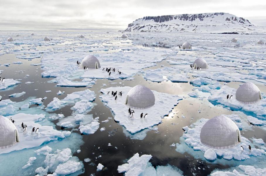 pinguins em sistema de reprodução