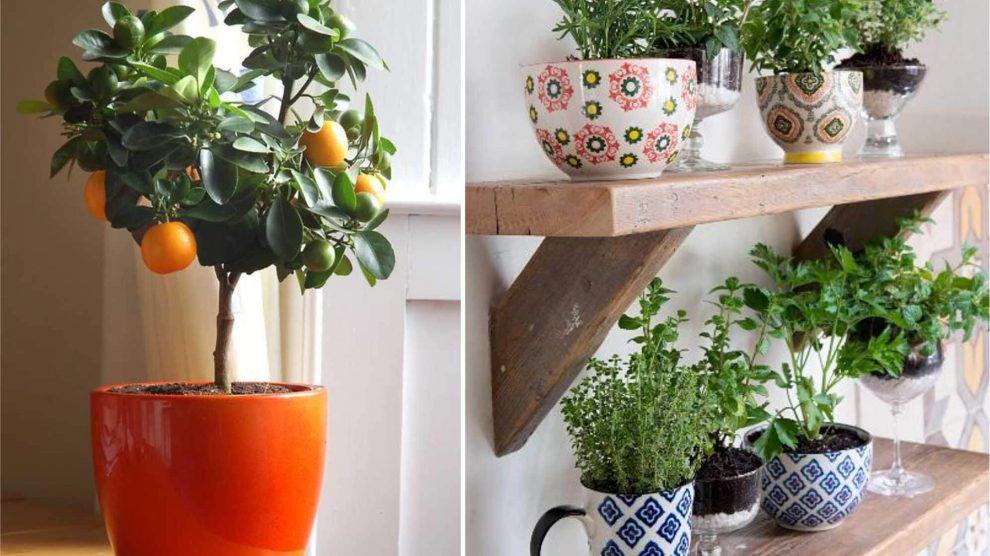 vaso horta em apartamento