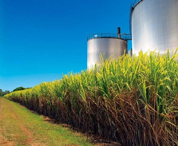 imagem de campo de platação representando fonte dos Combustíveis de Biomassa