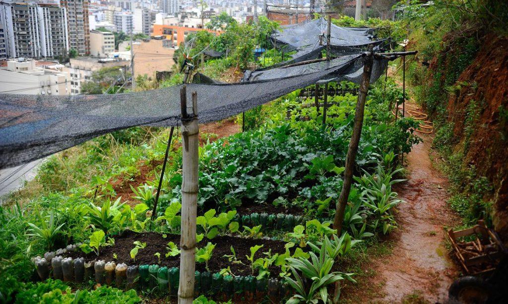 Horta Manguinhos