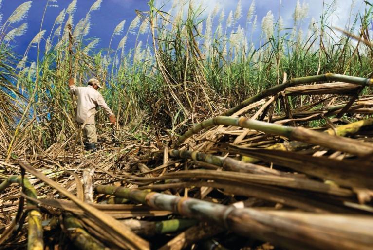 Cientistas brasileiros descobrem que bagaço de cana-de-açúcar pode 'limpar' água poluída