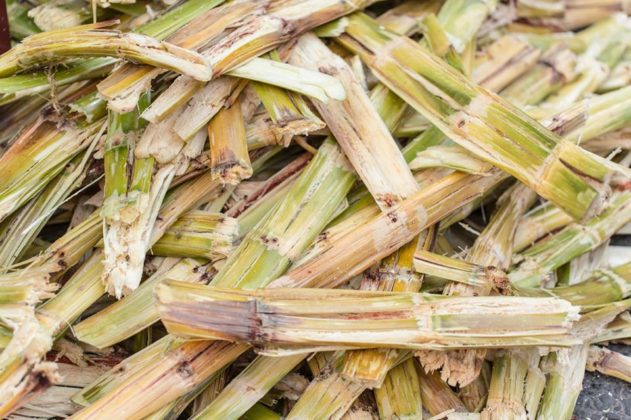 Bagaço de cana-de-açúcar pode 'limpar' água poluída