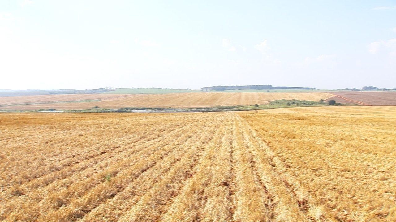 Imagem de plantação de soja, vista de cima - Startup fundada por brasileiro cria nanosatélite que promete soluções para a agricultura